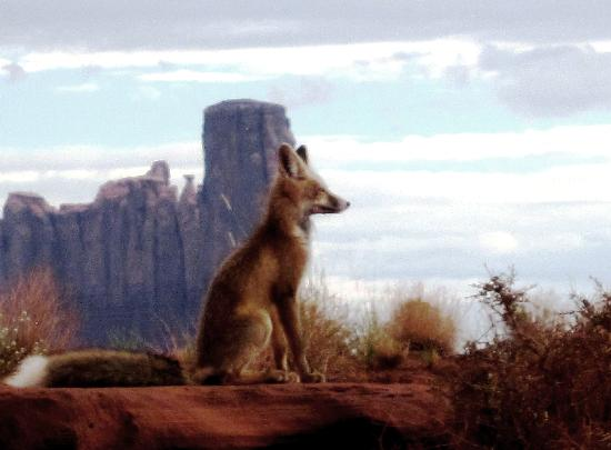 Monument Valley Safari: Wild foxes in the valley