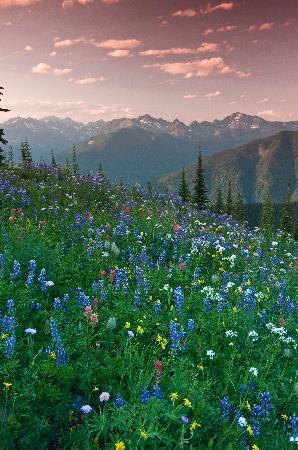 Mountain Trek Fitness Retreat & Health Spa: Experience awe-inspiring mountain views