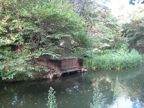 Nerima, Japón: 「あしの島」にあるカワセミの巣