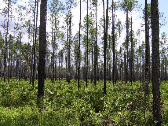 Okefenokee Swamp Park : Drive around