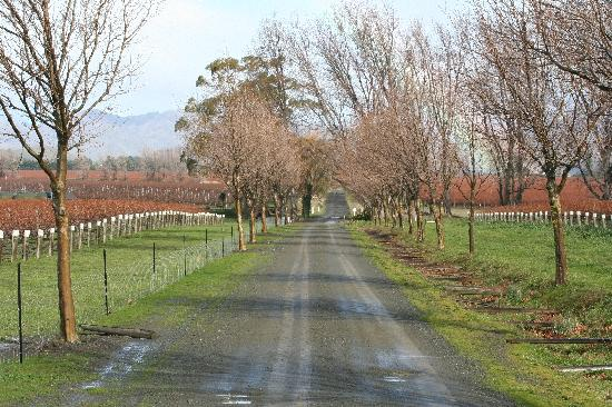The road to Ugbrooke Country Estate