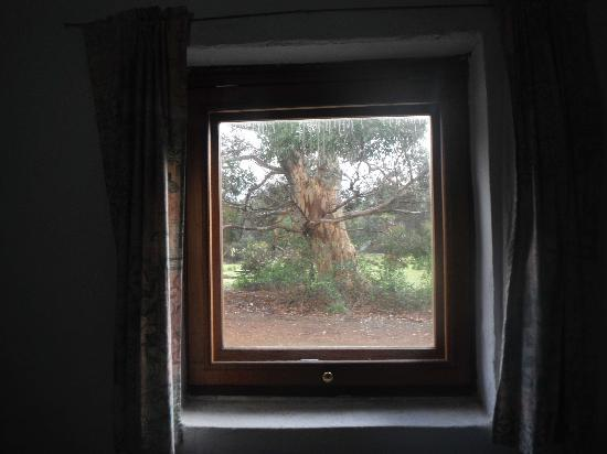 Rocky River Heritage Accommodation: Beautiful Tree from inside Postman's Cottage