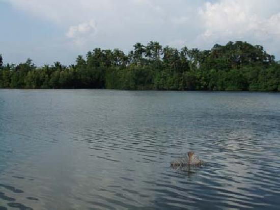 Villa Birdlake: the lake