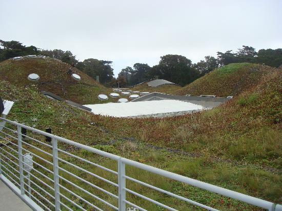 California Academy of Sciences: Il tetto vivente