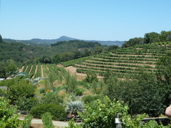 Benziger Family Winery: Views from the tour