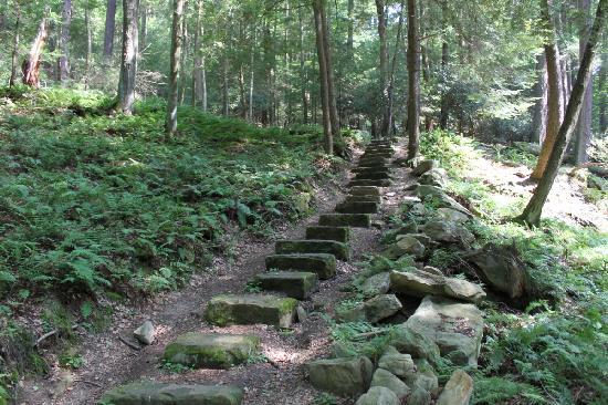 Cooksburg, PA: Hiking in the Cook Forest State Park