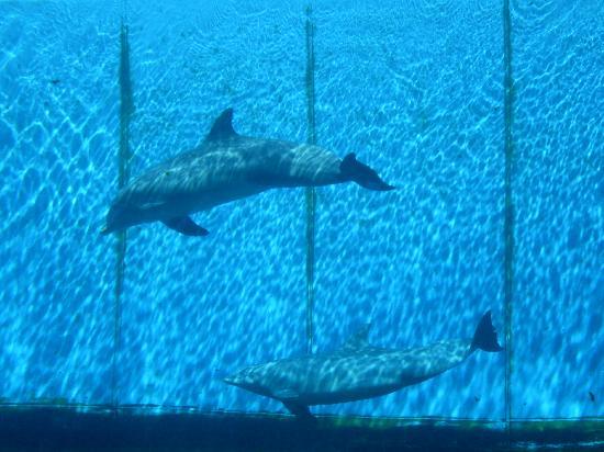 Hotel Mediterraneo: immancabile visita all'acquario di Genova
