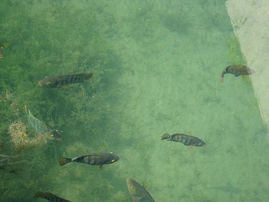 Fairmont Mayakoba: peces en el manglar