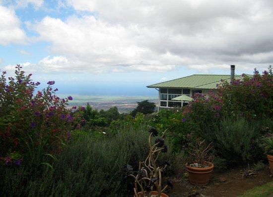 Ali'i Kula Lavender Farm: View from the tour