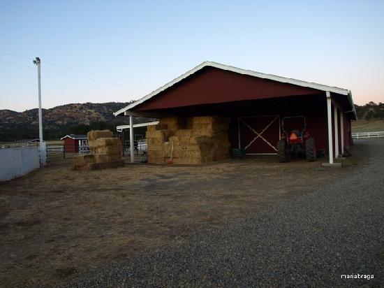Rancho Bernardo Bed & Breakfast: The barn