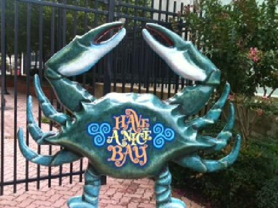 Inn at The Black Olive: Right next door a dancing crab in the sun!