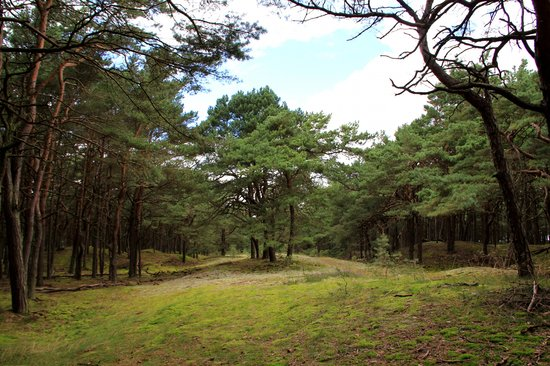 Mecklenburg-West Pomerania, Germany: Trees going into the many Juliusruh beaches