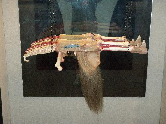 The Army Museum: One of many bizarre displays in art exhibit of weapons