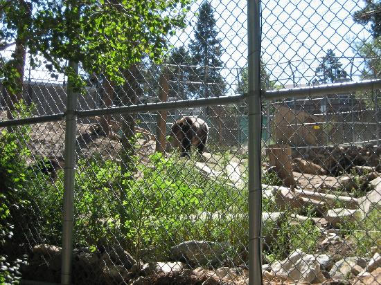 Goldmine Lodge: bear