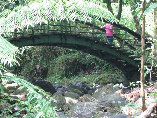 Fautaua Waterfall: Moss