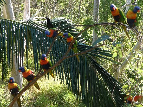 Oskar's Rainforest Retreat Bed and Breakfast: The birdlife