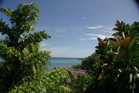 Tranquilseas Eco Lodge and Dive Center: the actual view from the Tree Frog cabana