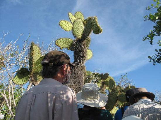Dragon Hill (Cerro Dragon): Giant cacti