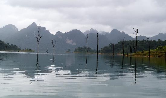 Tree Tops: kayak on the lake