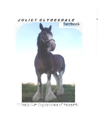 Morpeth Horse Carriage: Juliet Clydesdale