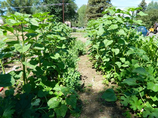 The Brick Cellar Garden...looking West across the garden property.