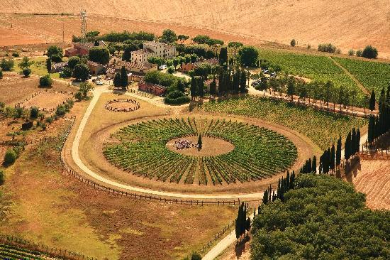 Weingut Avignonesi: Vigna tonda - Round Vineyard