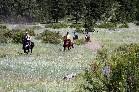 Cherokee Park Ranch: Flat out lopping