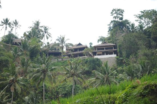 Villa Indah: View of Villa's from rice terrace below. Ask for a guide.