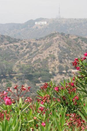 หอสังเกตุการณ์กริฟฟิท: A scenic view of the Hollywood sign