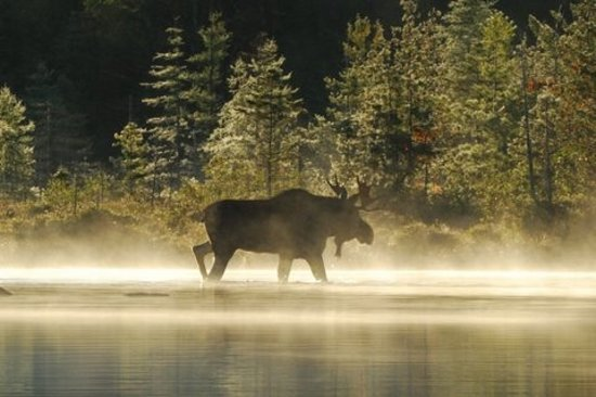 Northeast Whitewater - Day Tours : Maine Moose Watching Tours