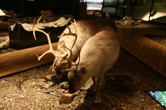 Svalbard Museum: im Museum