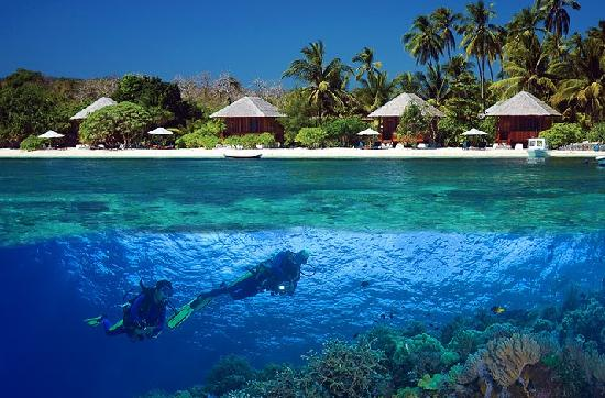 วากาโทบิ ไดฟ์ รีสอร์ท: Wakatobi's spectacular house reef is just a few steps from your room.