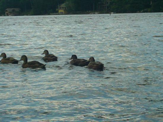 Dexter's Inn : Lucky Duckies enjoy the lake