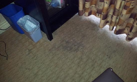 Prestige Beach House : Carpet Stains
