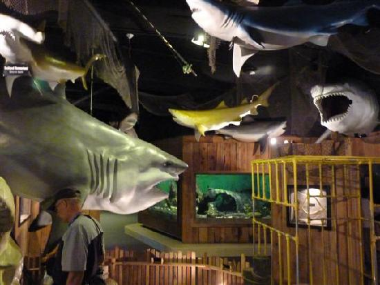 Sharks Picture Of Aquarium Of Niagara Niagara Falls