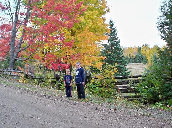 Wildwood Bed & Breakfast: Autumn Colours