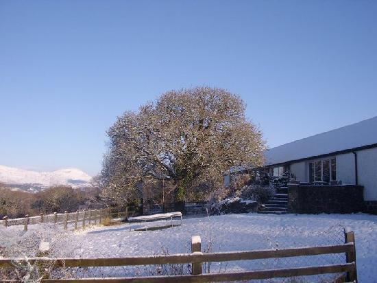 Hazelwood Bed and Breakfast: a snowy morning in the back garden