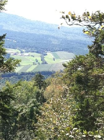 Mount Will Walking Trail : great half-day hike