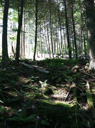 Mount Will Walking Trail : pines