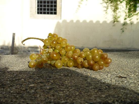 Agriturismo Modi: Vendemmia