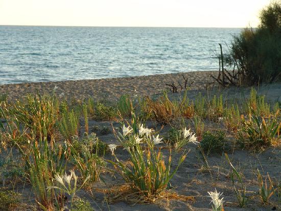 Li Patuli: La spiaggia