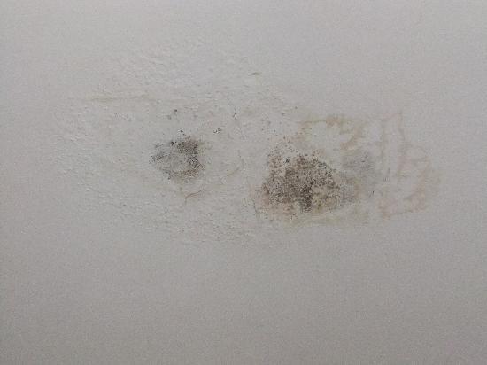 Hetland Hall Hotel : close-up room 24 mould