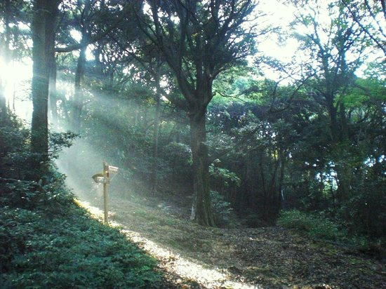Salon Haraguchi Tenseian: walking up the hiking path behind the house in the early morning