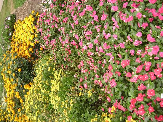 Annual Flower Trial Garden: Beautiful flowers!