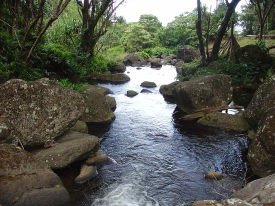 Hanalei, Hawaï : Limahuli has one of the last remaining pristine streams