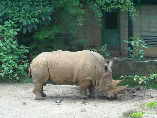 Mayaguez Zoo: rhino