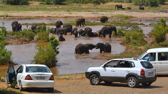 Olifants Rest Camp: Elephants at play