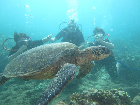 Scorpion Scuba Safaris: Oh ya turtles too