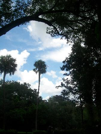 Wekiwa Springs State Park: Tree and Sky