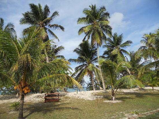 Chalets d'Anse Forbans: Tropical garden